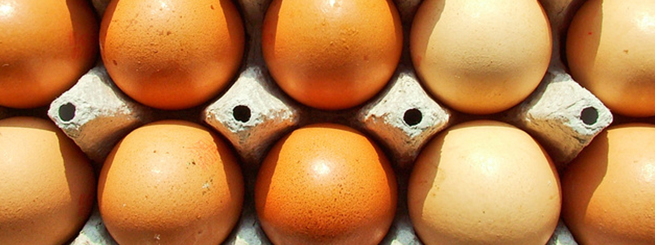 Egg carton with eggs pictured from above. Caldic Savoury Food Ingredients Solutions include proteins such as egg protein, soy protein and pea protein.